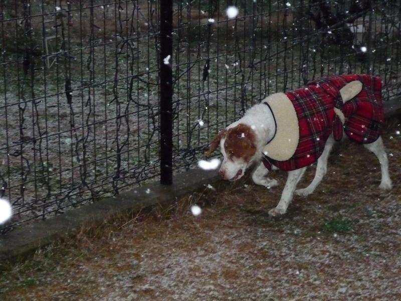 東北初の雪体験中!