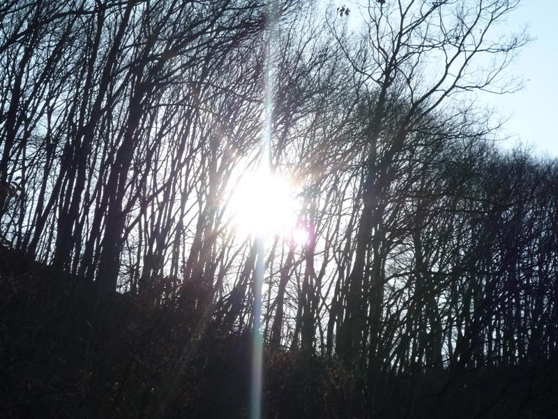 朝日の木漏れ日♪