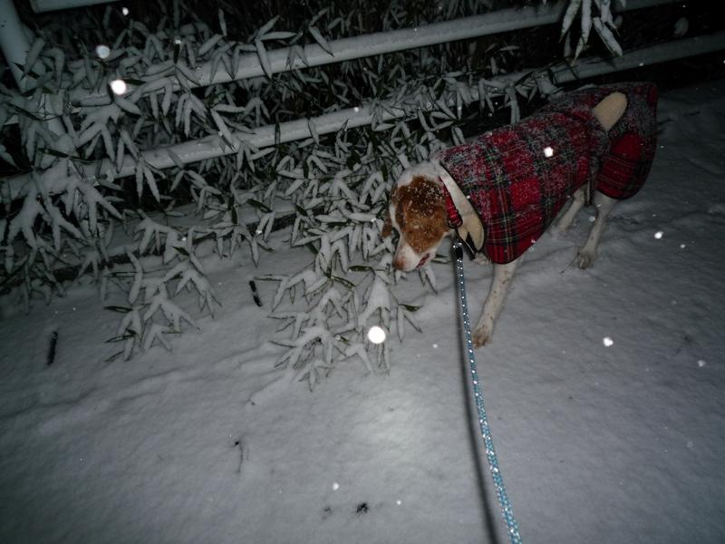 雪の中をお散歩です