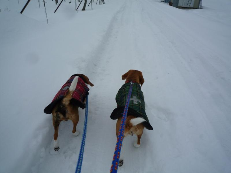 田んぼ道は雪がいっぱい!