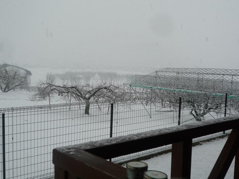 雪景色だよ!