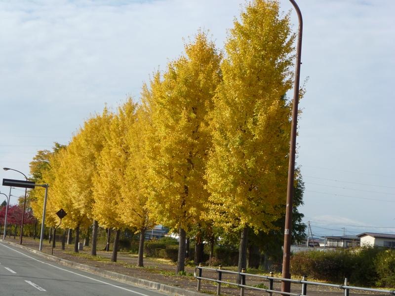 秋ねぇ〜!