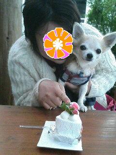 ケーキとHARUと